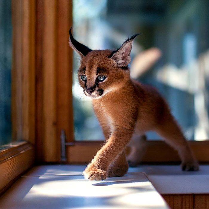f138d7f77c1fdc7ad0f231210f911885--cute-baby-animals-wild-animals (700x700, 58Kb)