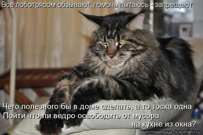 kotomatritsa_Cl (700x464, 281Kb)