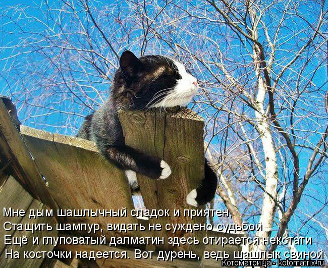 kotomatritsa_g (650x531, 466Kb)