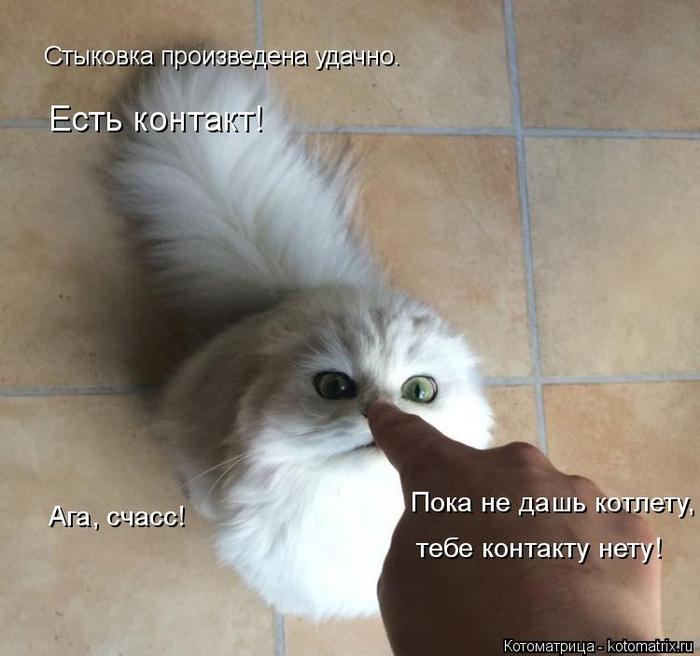 kotomatritsa_K (700x656, 305Kb)