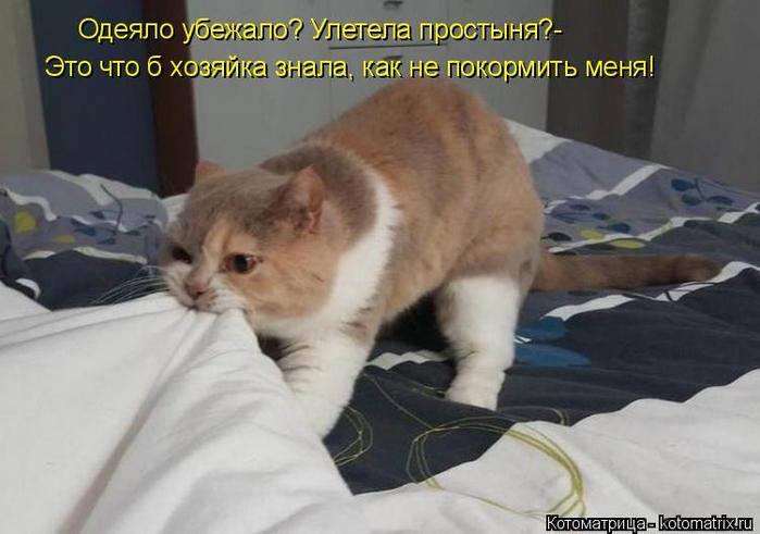kotomatritsa_s (700x491, 251Kb)