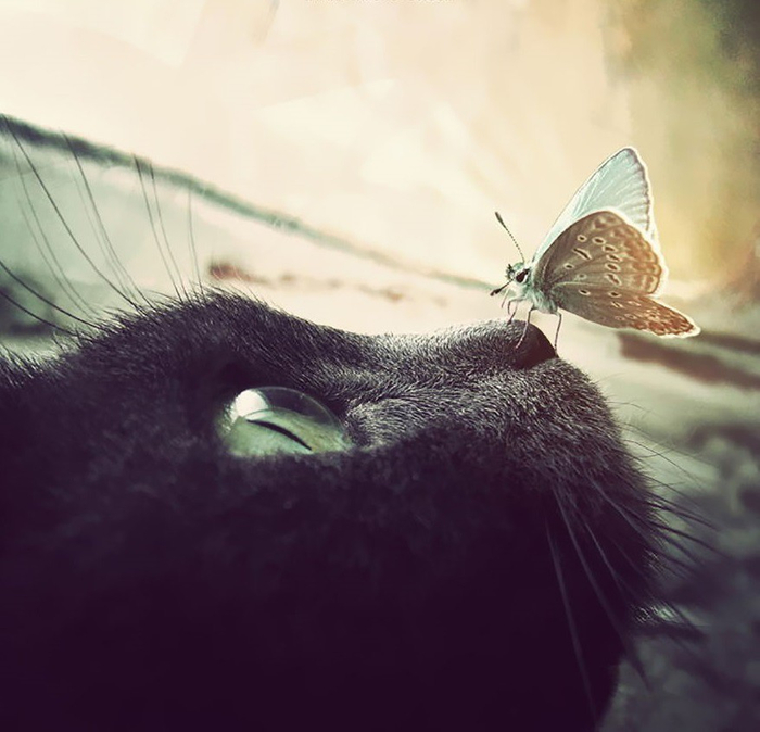 animals-with-butterflies-9__880 (700x674, 273Kb)