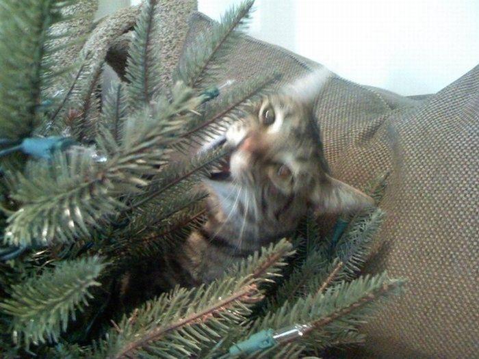 Christma_tree_cat_19 (700x525, 78Kb)