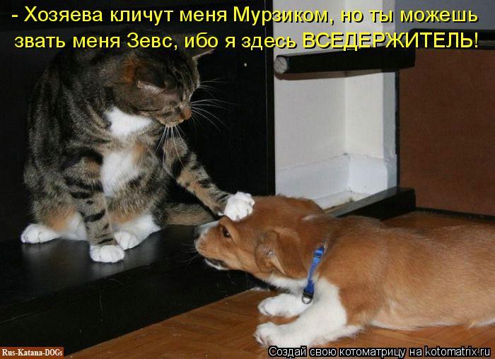 kotomatritsa_9 (700x508, 246Kb)