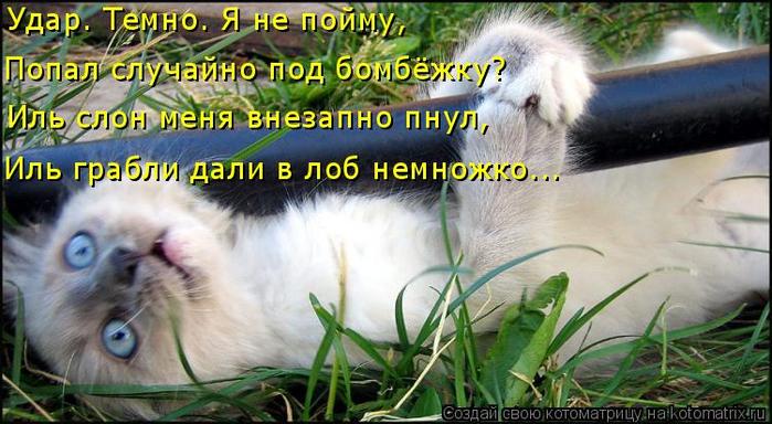 kotomatritsa_gm (700x384, 348Kb)