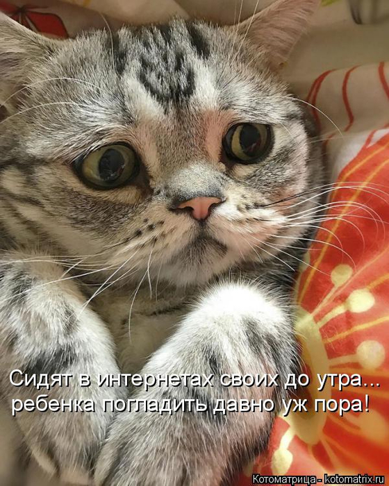 kotomatritsa_j (560x700, 408Kb)