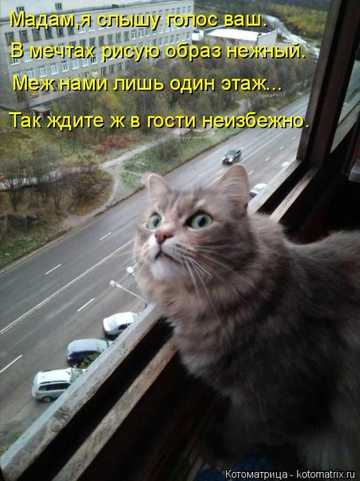 kotomatritsa_RF (524x700, 362Kb)