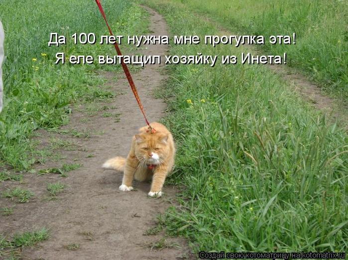 kotomatritsa_wq (700x524, 448Kb)