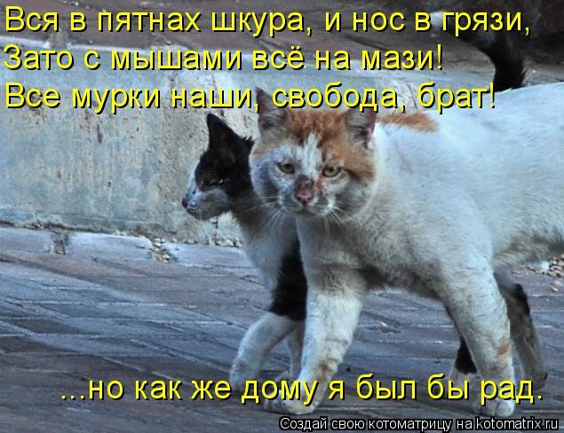 kotomatritsa_A (635x488, 293Kb)