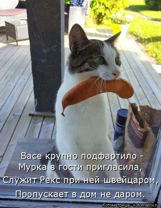 kotomatritsa_y3 (541x700, 416Kb)