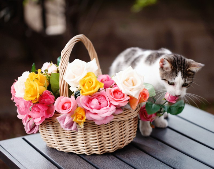 Cats_Sniffing_Flowers_01 (700x553, 348Kb)