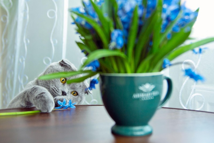 Cats_Sniffing_Flowers_05 (700x466, 268Kb)