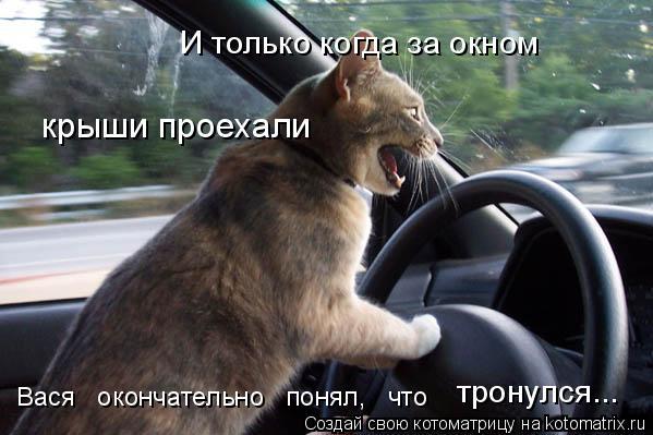 kotomatritsa_hO (599x399, 162Kb)
