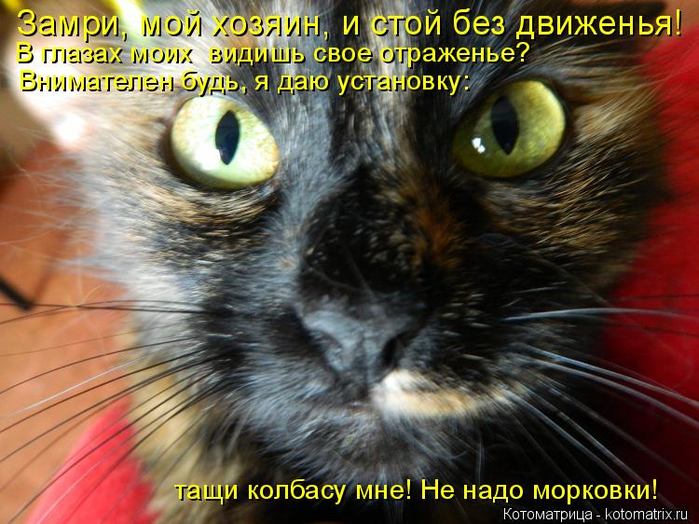 kotomatritsa_m (700x524, 432Kb)