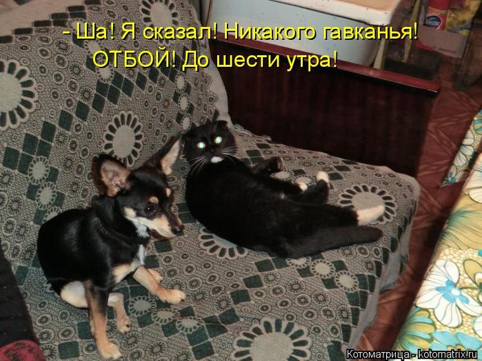 kotomatritsa_sh (700x524, 405Kb)