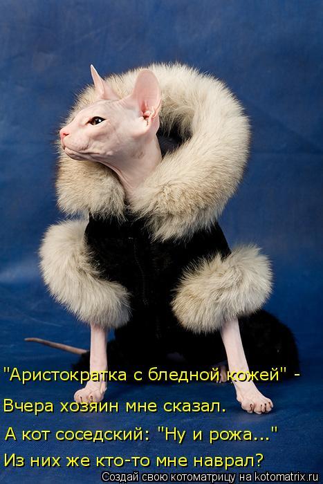 kotomatritsa_5u (467x700, 242Kb)