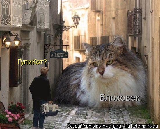 kotomatritsa_a (550x444, 168Kb)
