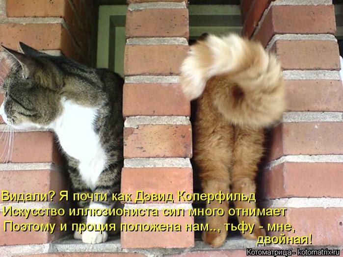 kotomatritsa_K (700x524, 406Kb)