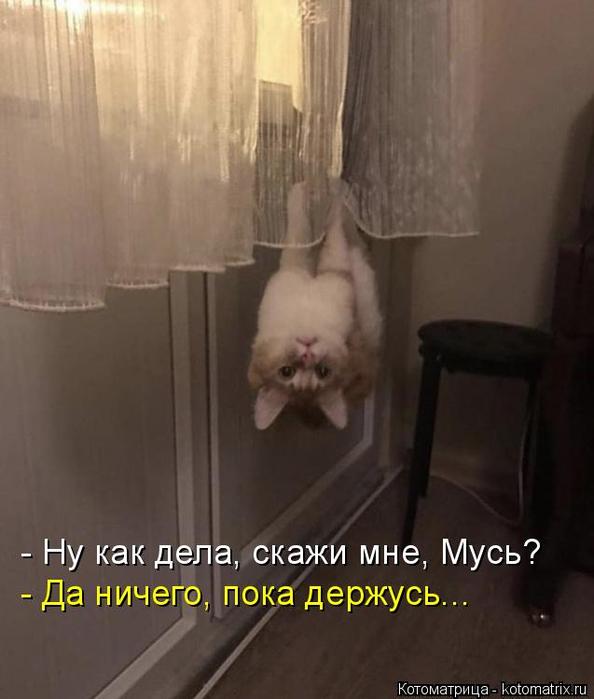 kotomatritsa_w (594x700, 230Kb)