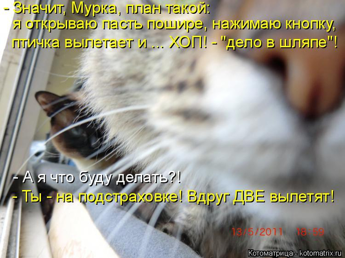 kotomatritsa_z (700x524, 378Kb)