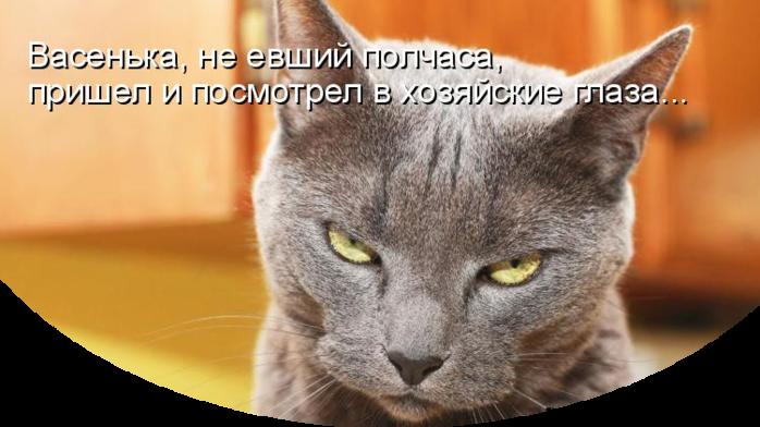 Свежая котоматрица для любителей домашней живности/3509984_ (700x392, 381Kb)