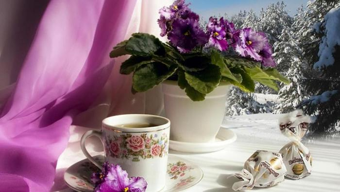 a-cup_of_tea_and_purple_flowers-1408912 (700x395, 44Kb)