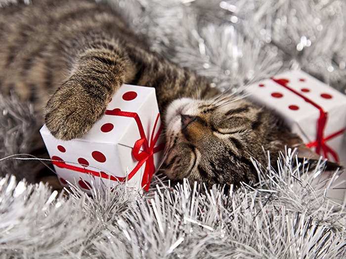 Cats_Christmas_Gifts_Sleep_Cube_511968_800x600 (700x525, 231Kb)