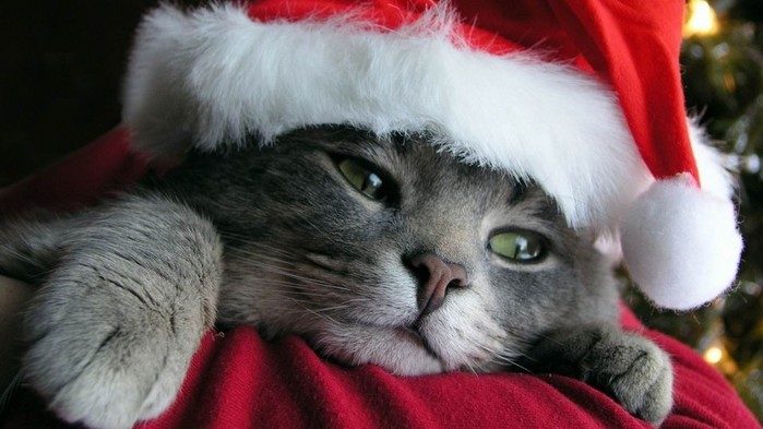 cats-christmas-1600x900-wallpaper (700x393, 69Kb)