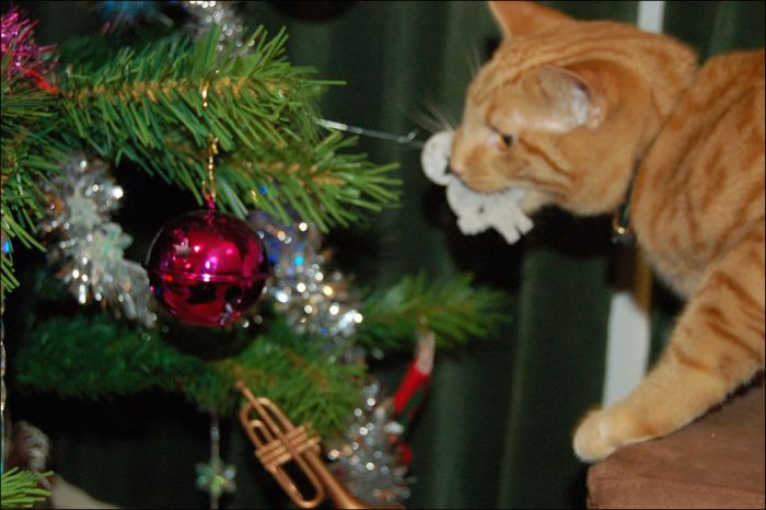 cat_christmas_tree_25 (700x466, 49Kb)