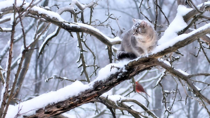 cat-sitting-on-the-snowy-branch (700x393, 312Kb)
