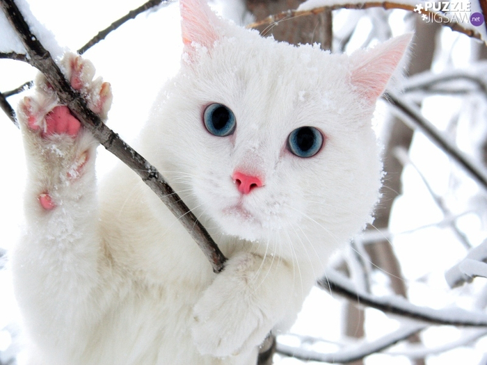twigs-cat-white (700x525, 322Kb)