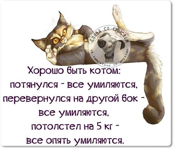 1422300103_frazki-8 (604x517, 200Kb)