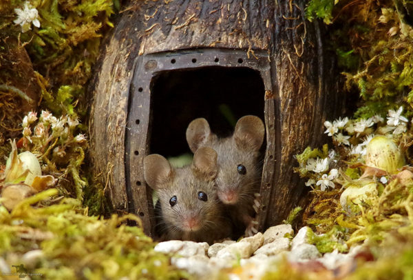 miniature-mice-family-house-simon-dell-43-600x406 (600x406, 202Kb)