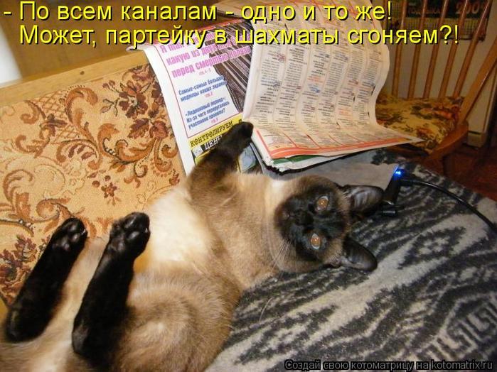 kotomatritsa_A (700x524, 446Kb)
