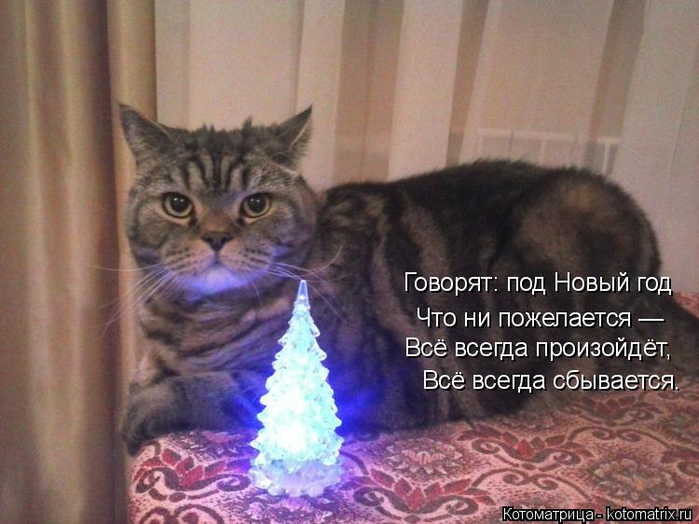 kotomatritsa_S (700x524, 353Kb)