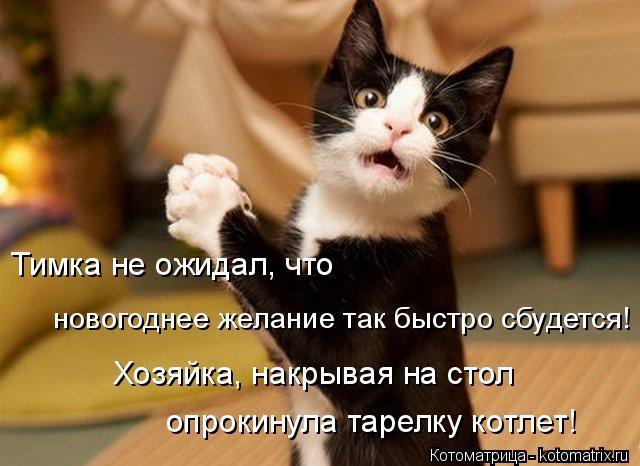 kotomatritsa_aZ (640x466, 233Kb)