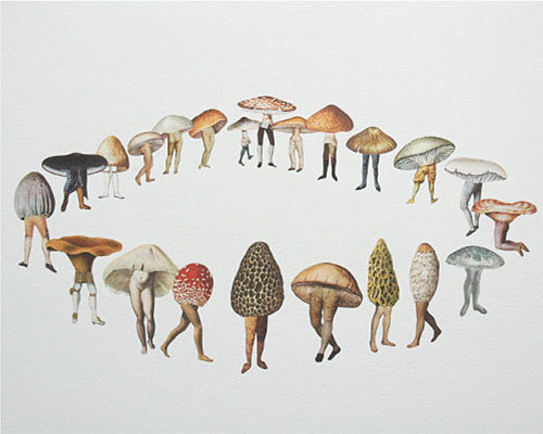 3726595_content_mushroomcaps_1_ (500x400, 48Kb)