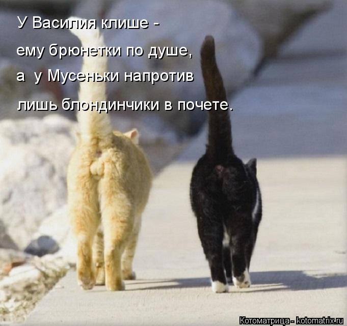 kotomatritsa_- (681x641, 204Kb)