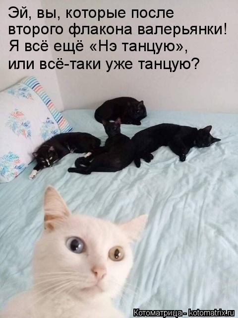 kotomatritsa_E (480x640, 147Kb)