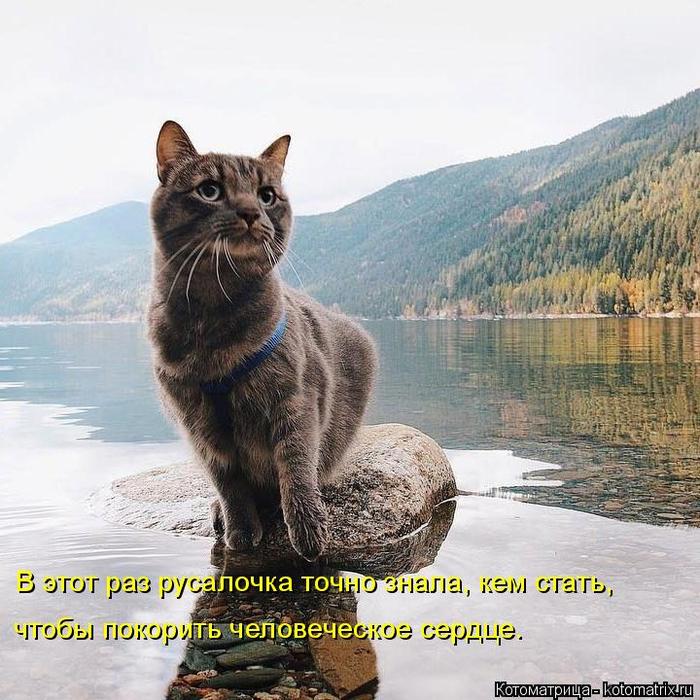 kotomatritsa_YS (700x700, 458Kb)