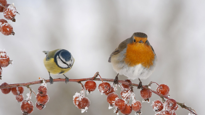 BigGardenBirdwatch_EN-GB14409615569_th (700x393, 72Kb)