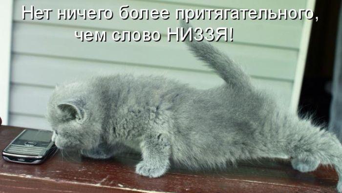 Pro-kotov-028 (700x395, 57Kb)