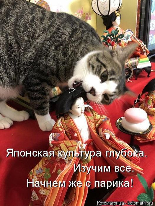 kotomatritsa_9M (525x700, 437Kb)
