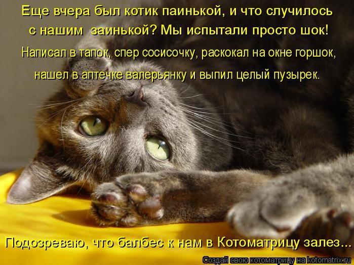 kotomatritsa_a (700x524, 427Kb)