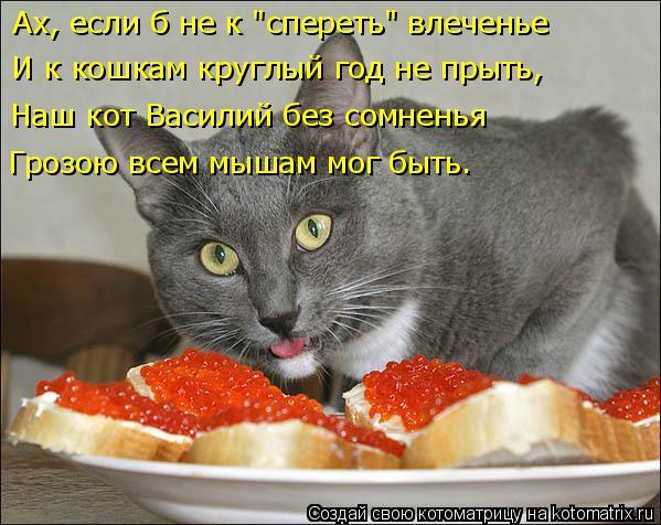 kotomatritsa_I (599x476, 242Kb)