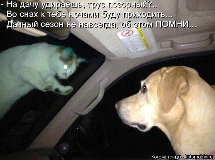 kotomatritsa_kY (700x519, 306Kb)