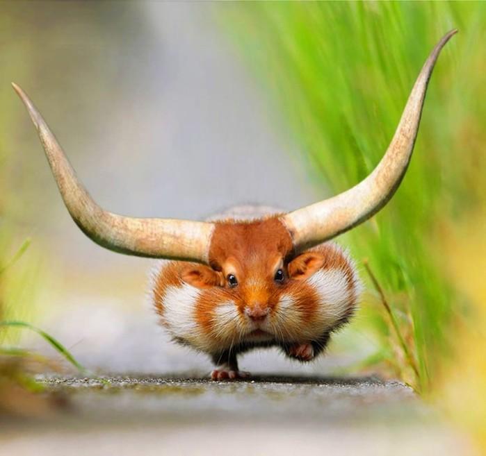 Безумные гибриды животных, которые рассмешат вас до слез