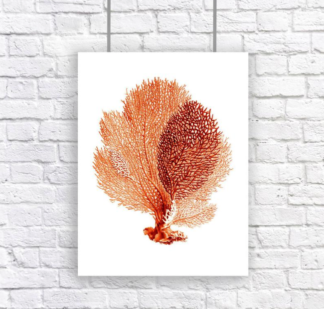 4027137_FireShot_Capture_700__Large_Sea_Fan_Coral_Print_Red_Orange____https___www_etsy_com_listing_18057 (650x619, 603Kb)
