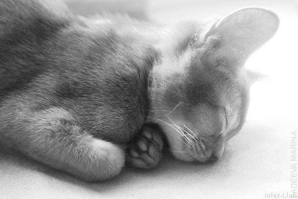 cats_02 (600x400, 88Kb)