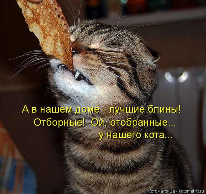 Котоматрица. У людей масленица, а у котов колбасница